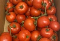 Herzog Großhandel Bio Produkte Sortiment Tomaten