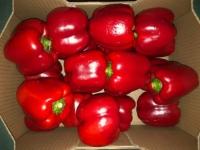 Herzog Großhandel Bio Produkte Sortiment Paprika