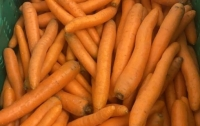 Herzog Großhandel Bio Produkte Sortiment Karotten