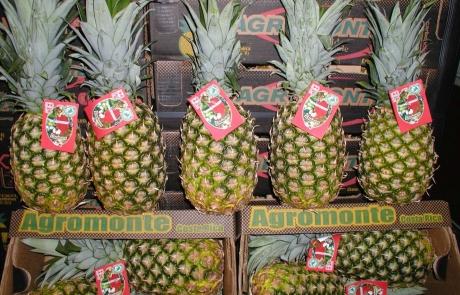 Herzog Großhandel Exotische Früchte Sortiment Ananas