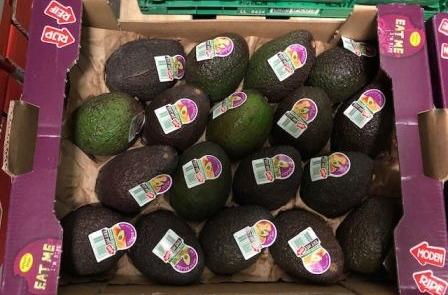 Herzog Großhandel Exotische Früchte Sortiment Avocados
