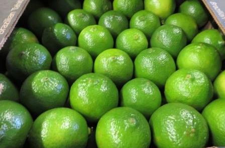 Herzog Großhandel Exotische Früchte Sortiment Limetten