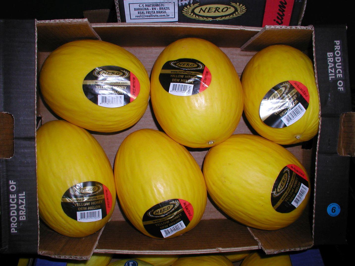 Herzog Großhandel Exotische Früchte Sortiment Homigmelonen