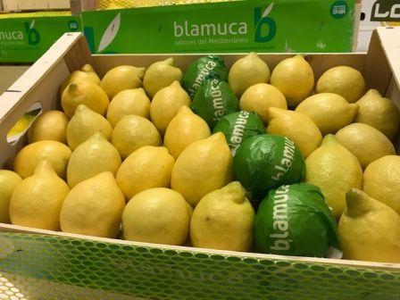 Herzog Großhandel Exotische Früchte Sortiment Zitronen