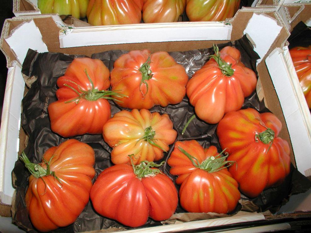 Herzog Großhandel Gemüse Sortiment Kürbis
