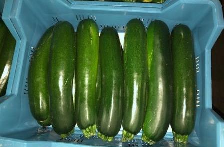 Herzog Großhandel Gemüse Sortiment