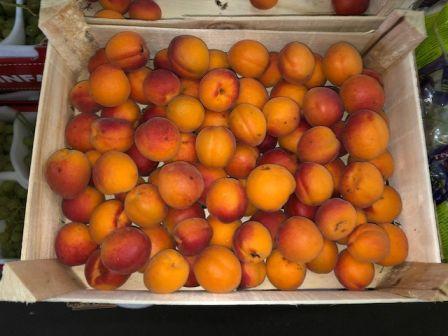 Herzog Großhandel Frisch Obst Sortiment Aprikosen Marillen