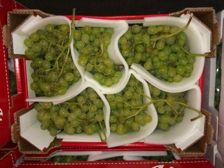 Herzog Großhandel Frisch Obst Sortiment Weintrauben