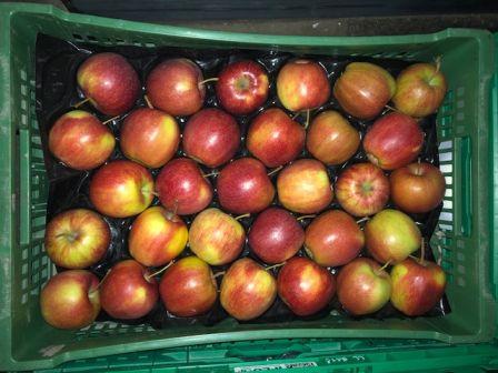 Herzog Großhandel Frisch Obst Sortiment Äpfel
