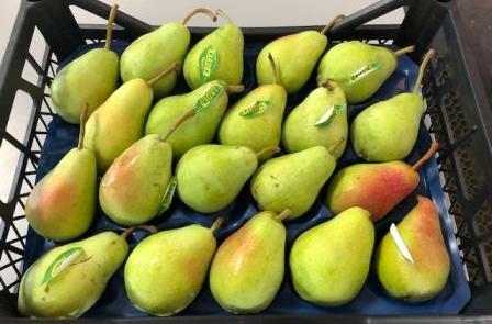 Herzog Großhandel Frisch Obst Sortiment Birne
